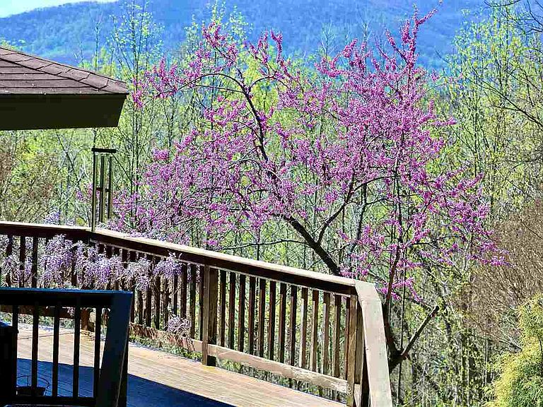 cotw around around, round top deck with flowering trees and mountains