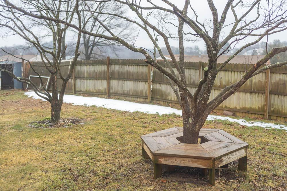 backyard bench around tree